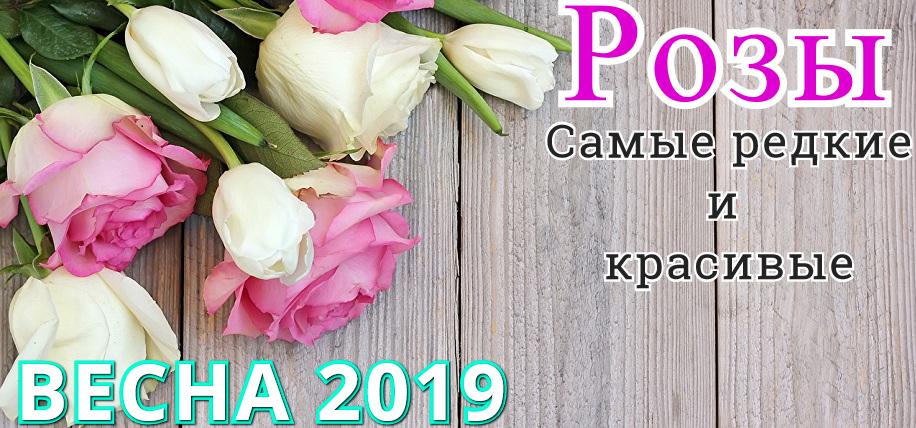 Интернет-магазин Мой Сад. Каталог роз на Весну 2019 года