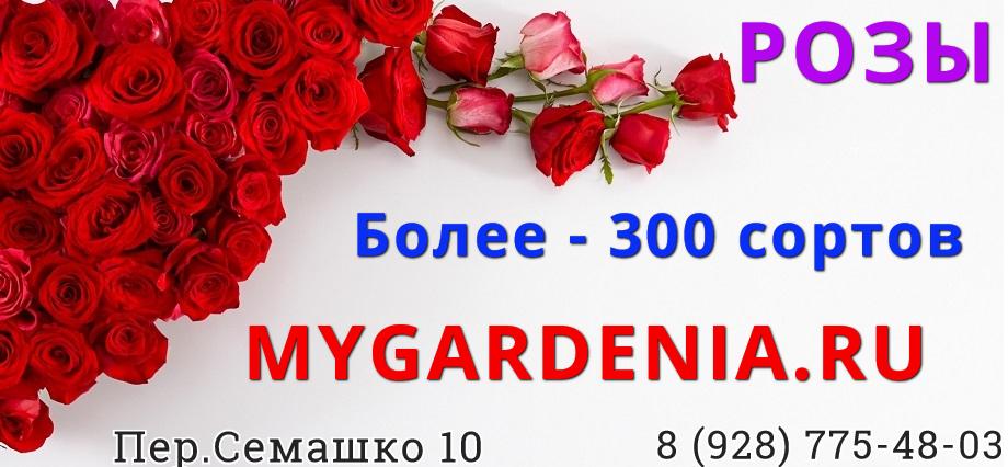 Баннер роз