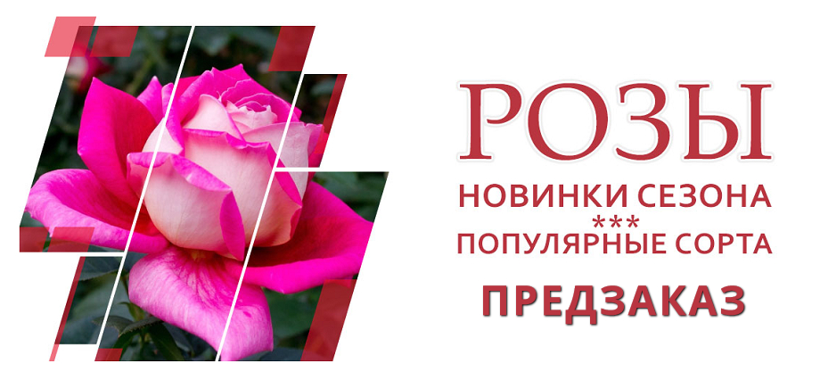 Розы!Предзаказ на осень! Интернет-магазин Мой Сад