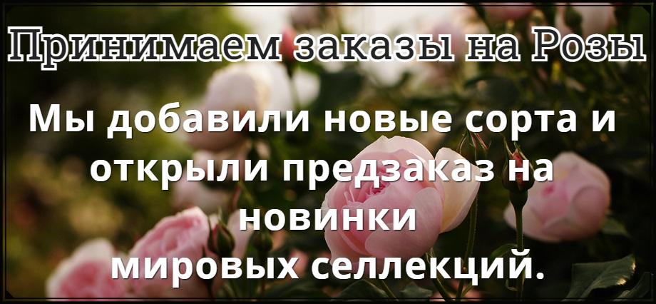Розы Мой Сад
