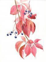 Декоративный  Виноград