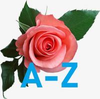 Розы по Селекционерам