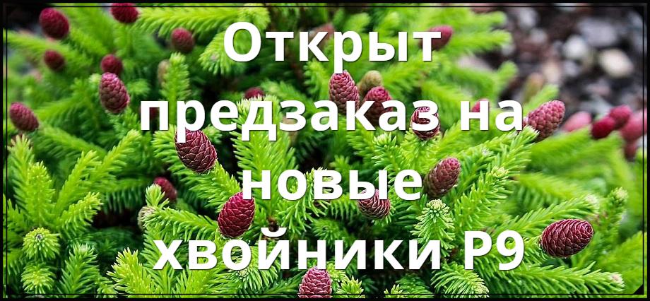 Деревья и кустарники! Интернет-магазин Мой Сад
