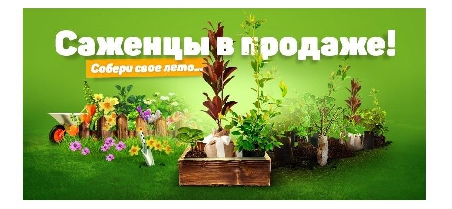 Клубника и земляника mygardenia.ru - мой сад