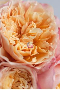 Роза Эдит | Edith (английские)