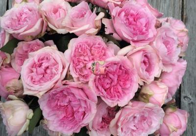 Роза Миранда | Miranda (Английские)