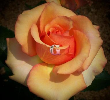 Роза Санс Трак | Sunstruck (чайно-гибридные)