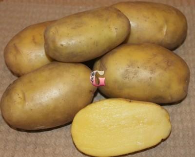 Семенной картофель Гулливер (2кг)