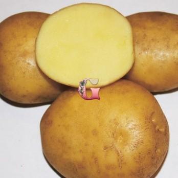 Семенной картофель Метеор (2 кг)