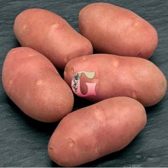 Семенной картофель Ред Скарлет (2 кг)