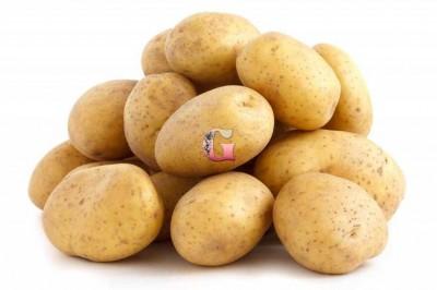 Семенной картофель Колобок (2 кг)