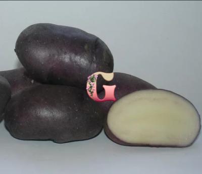 Семенной картофель Василек (2 кг)
