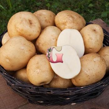 Семенной картофель Лорх (2 кг)