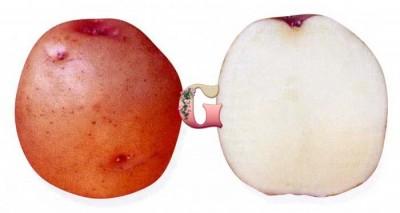 Семенной картофель Малиновка (2 кг)