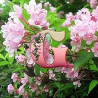 Вейгела садовая | Weigela hortensis