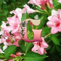 Вейгела цветущая | Weigela florida