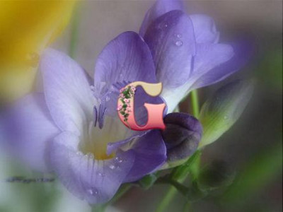Фрезия махровая голубая | Freesia Blue (10шт)