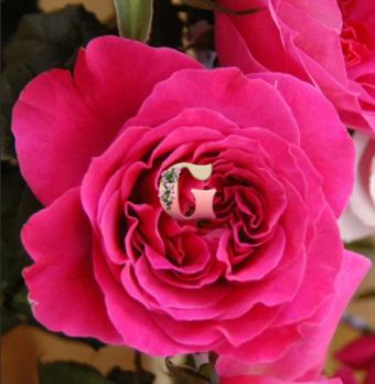 Роза Кейт | Kate (английская)