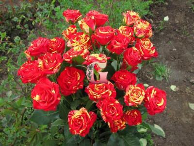 Роза Файер Флеш | Fire Flash (спрей - розы)