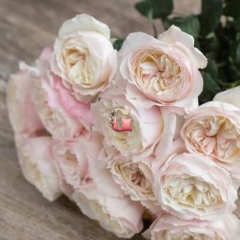 Роза Кейра |  Keira (английские)