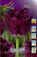 Тюльпан Бульдог (бахромчатый) (10 шт.)