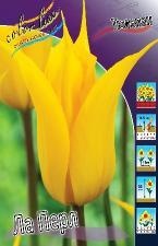 Тюльпан Ла Перл  (лил.) (10 шт)